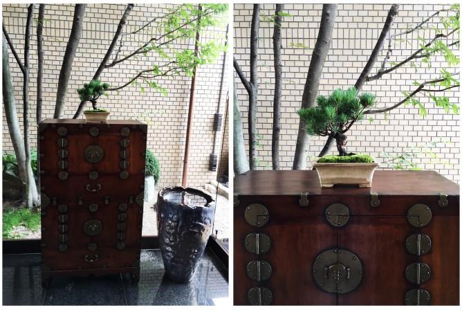 五葉松:生徒様作品 李朝箪笥との素敵なコーディネート。青々とした苔と凛々しい松は風格たっぷり。隣の壺には大森明生さんの金魚のオブジェが。透明感溢れる洗練されたしつらえのお玄関にはいい気が流れています。
