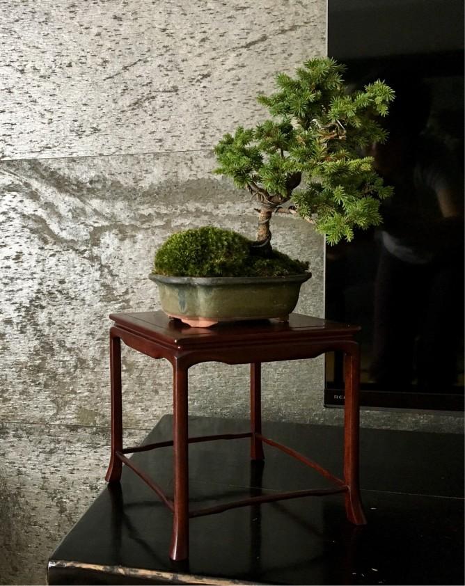 高卓ののせた蝦夷松・東さんの作品