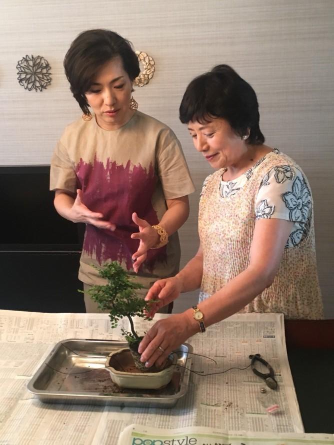 盆栽作業3