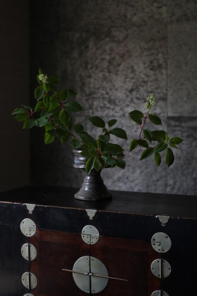 垂見圭竹・書籍掲載花の写真3
